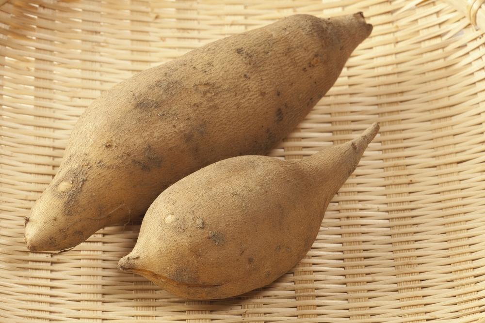 batata-yacon