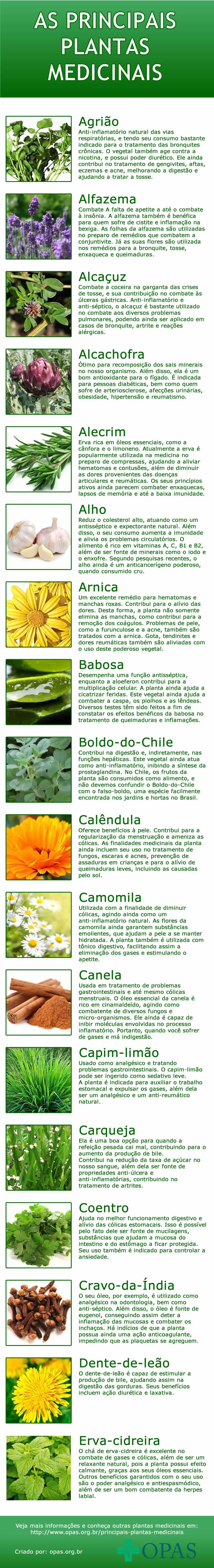 Infográfico das principais plantas medicinais
