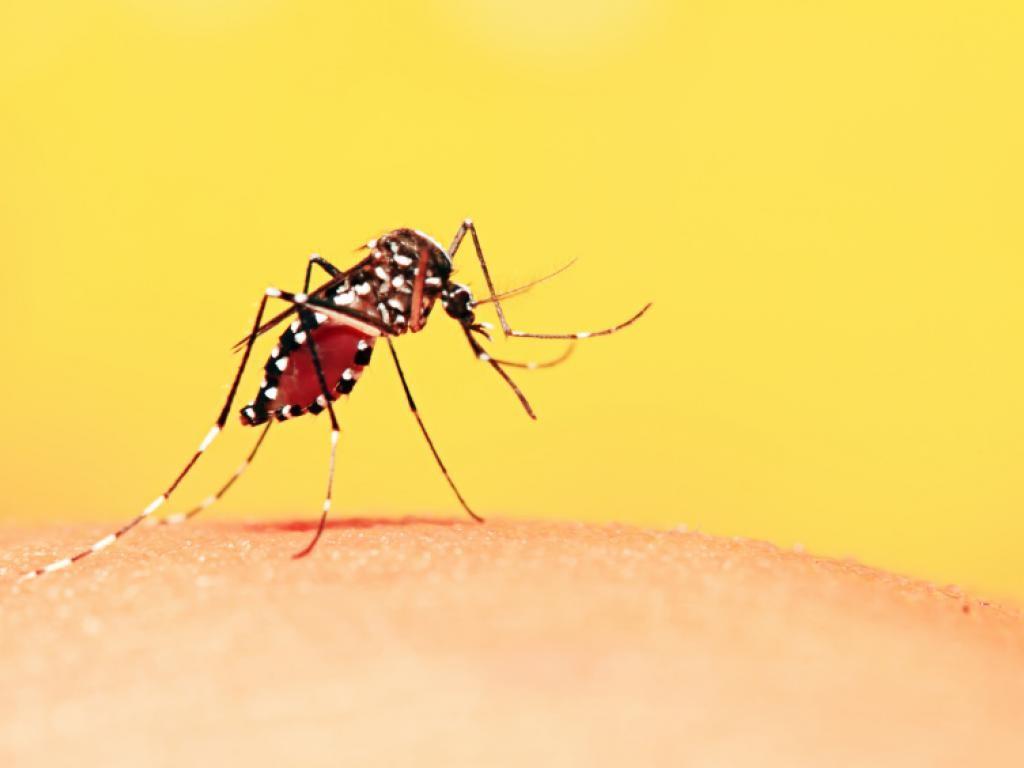 Chikungunya-Febre