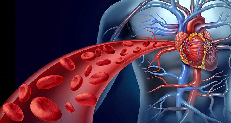 Artérias a carótidas nas reduzir placa como